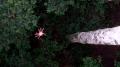 Araña en el alto de los arboles