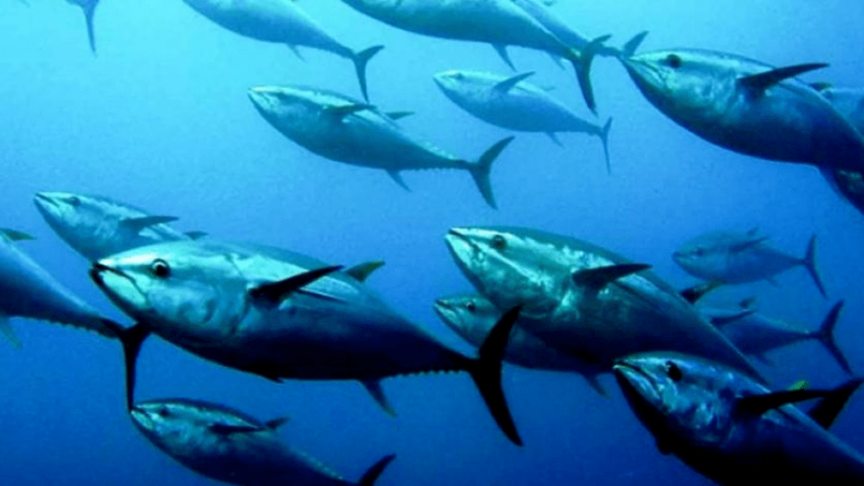 Banco de atunes