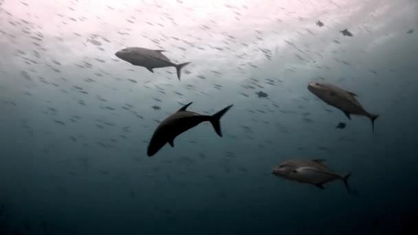 La vista del atún es envidiable