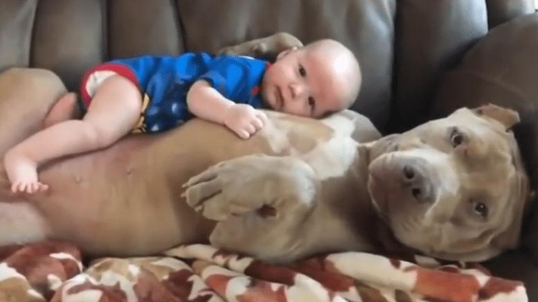Perro jugando con bebé
