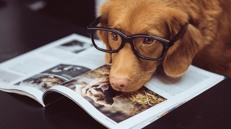 Un perro estudiante