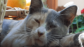 gato_durmiendo