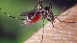 Con la llegada de las épocas de calor, uno de los problemas más frecuentes y molestos es la aparición de los insectos; lo quese pueden llegar a convertir en un verdadero fastidio. Pero la preocupación va más allá de tener que soportar el molesto zumbido, pues ahora se encuentra presente una nueva amenaza, el mosquito tigre.